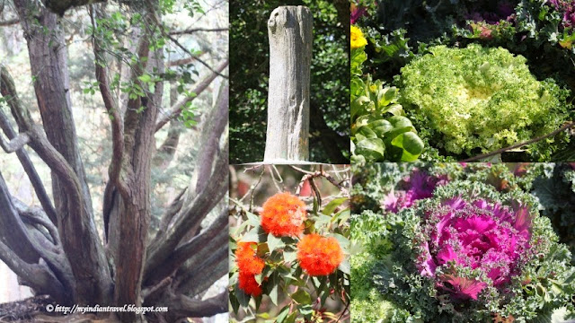 Here One Can Also See A Fossilized Tree Trunk. There Are Several Lawns With  Flowering Plants, Several Plots Of Flowering Plants, A Variety Of Medicinal  ...