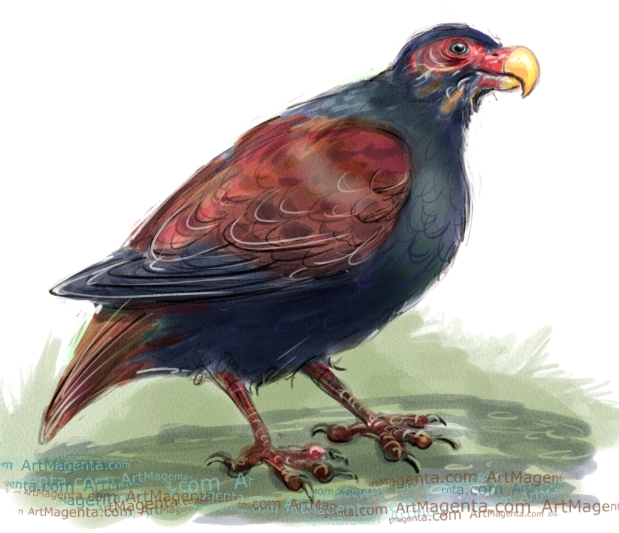 Tooth-billed pigeon sketch painting. Bird art drawing by illustrator Artmagenta