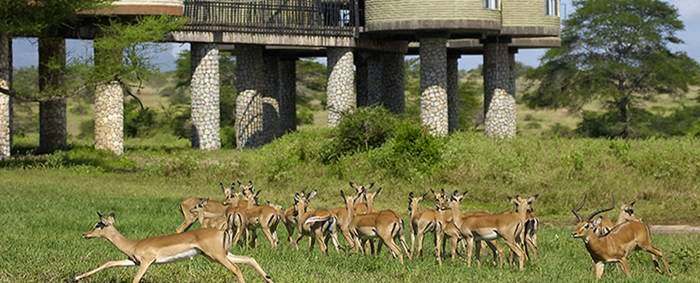 Sarova Salt Lick Lodge Taita Hills Game Sanctuary