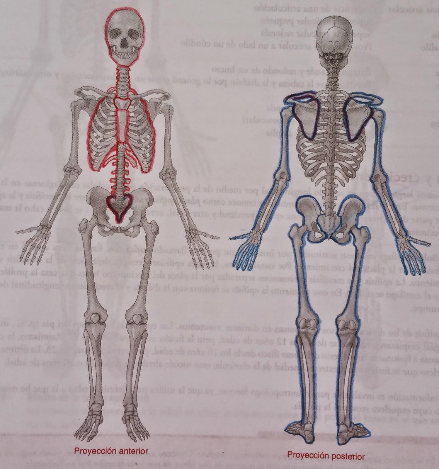 La anatomía Humana: 2015