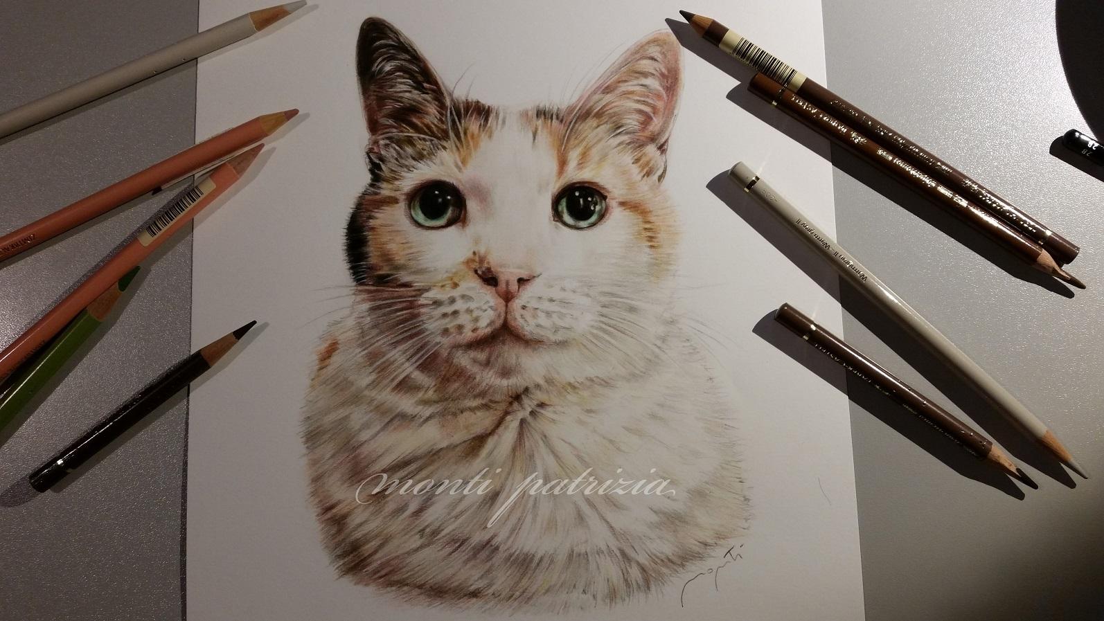 Dipinti e disegni animali dipinti a olio di patrizia monti - Gatto disegno modello di gatto ...