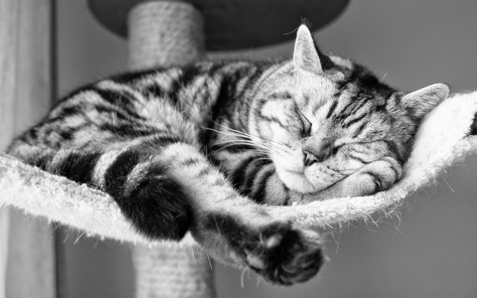 kebaikan tidur yang cukup