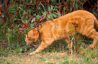 Cat out hunting