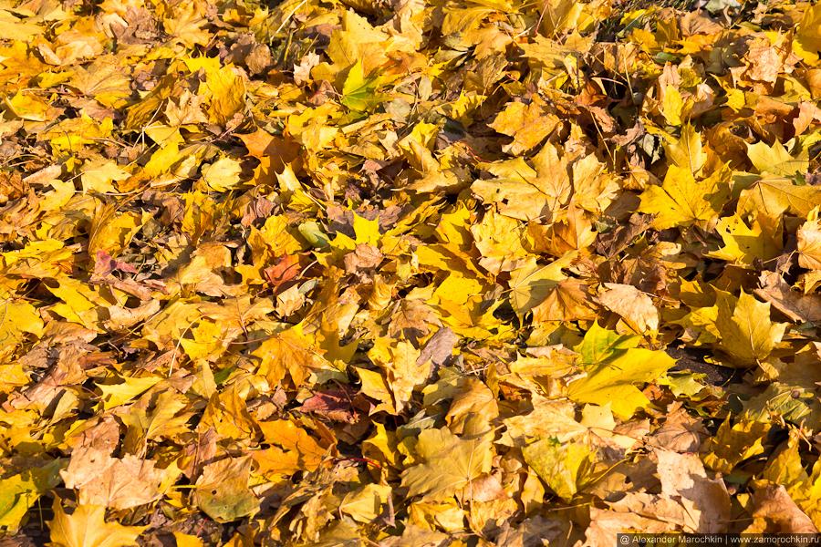 Жёлтые осенние листья в парке