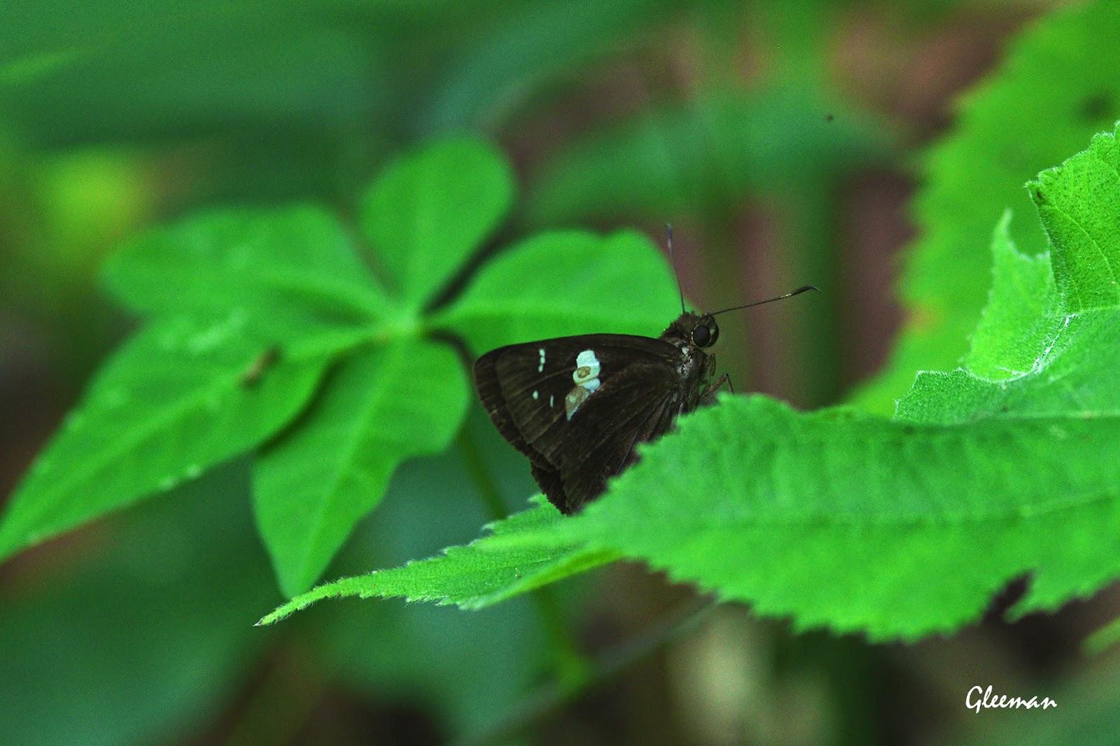 袖弄蝶於雞南山。