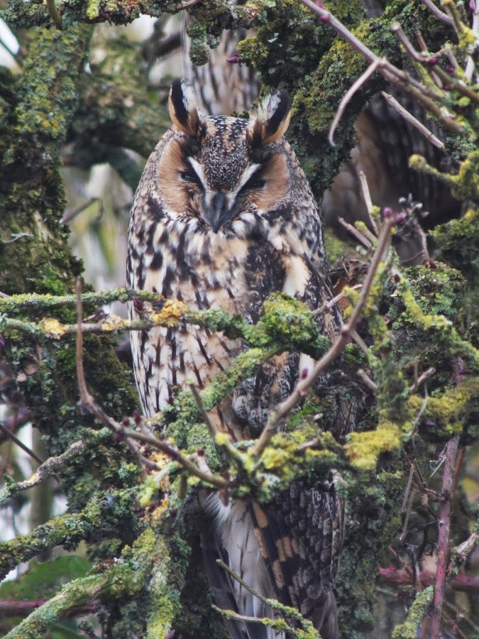 Digiscoping Blog By Colin Severs