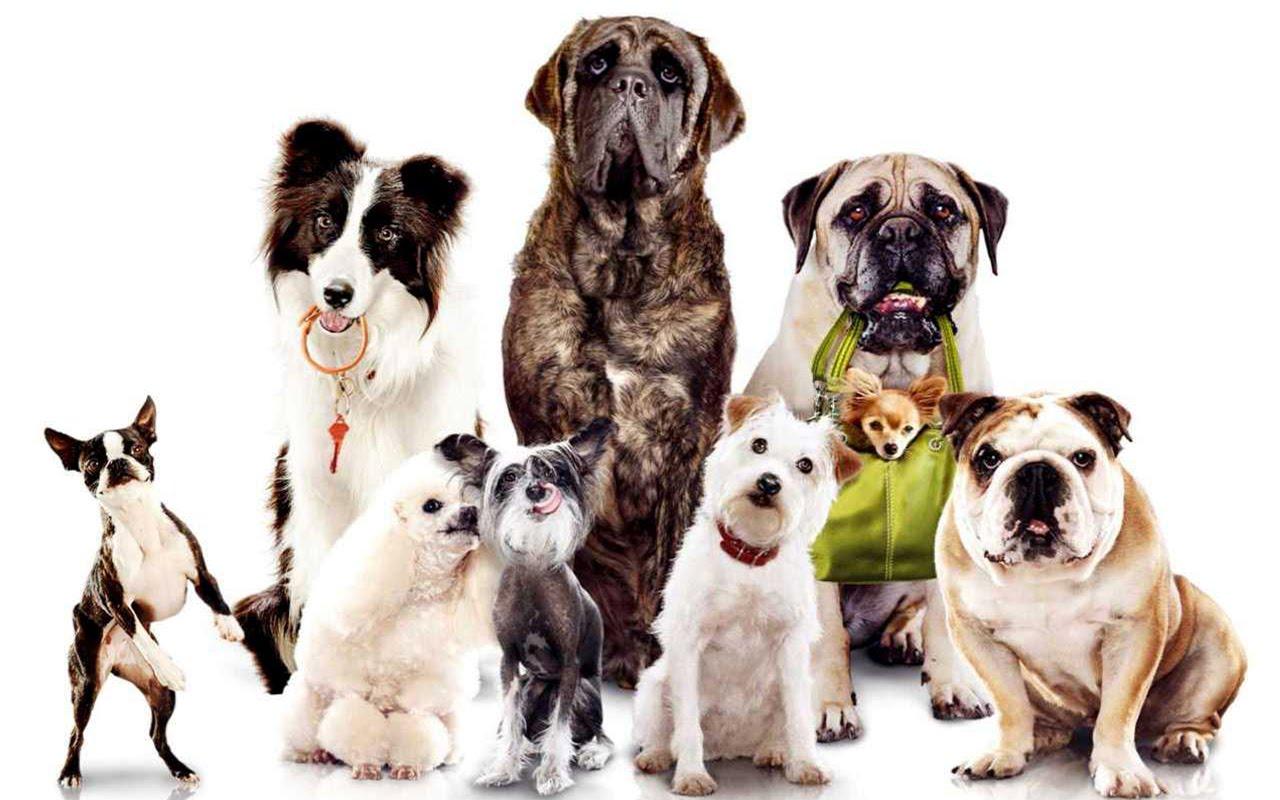 Paraíso dos Cães