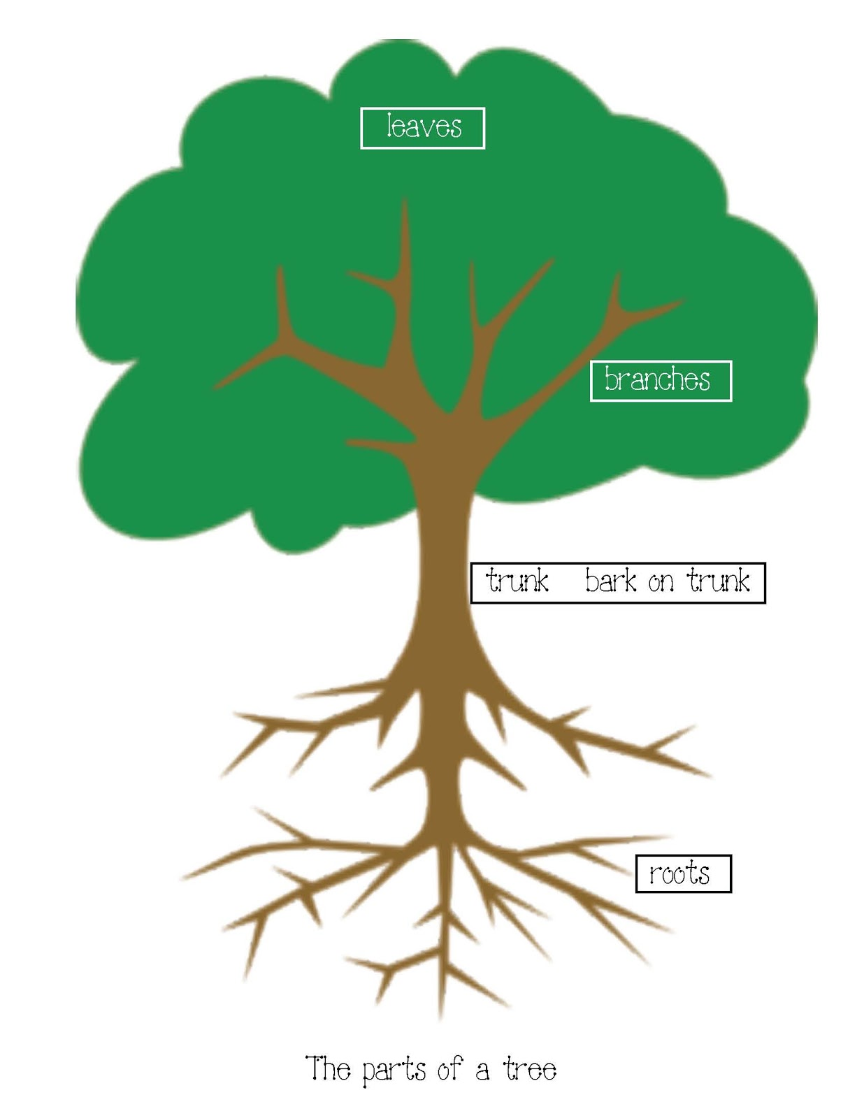 parts of a tree anchor chart poster