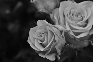 Black and white Flowers Picture
