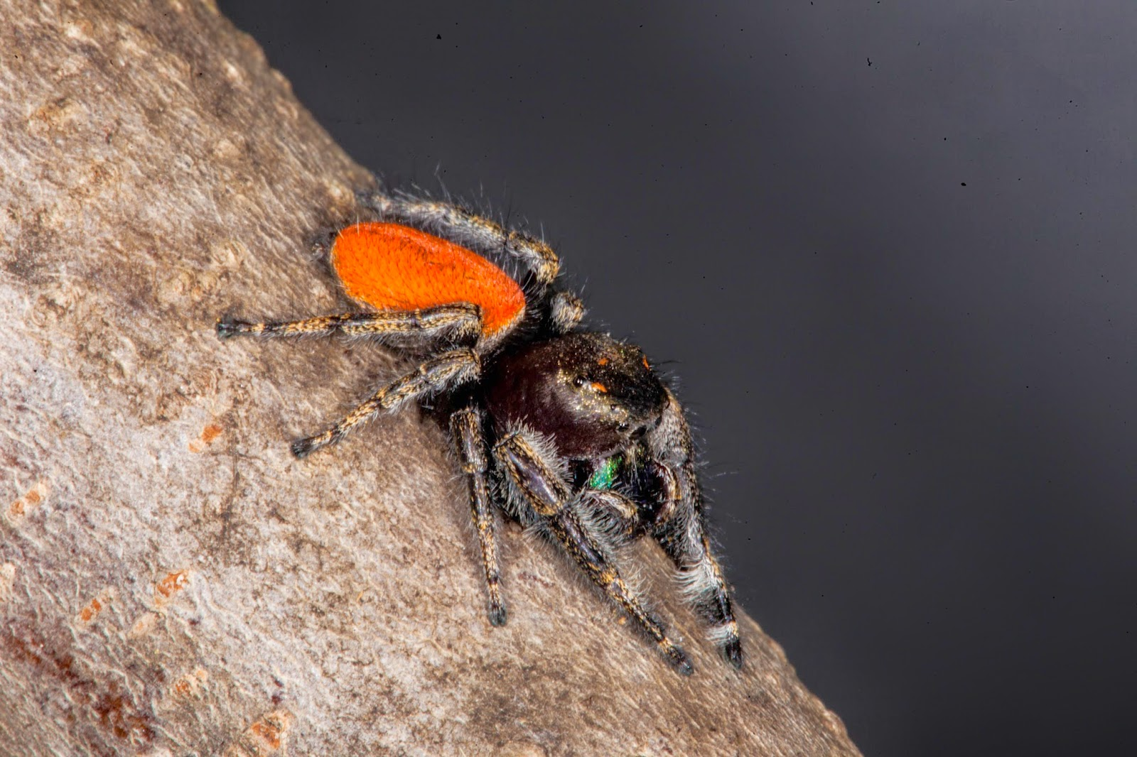Orange County Pest Control