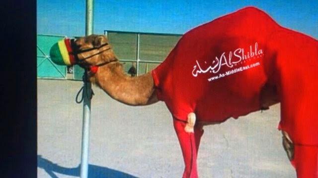 لباس أحمر عليه شعار الشبلة