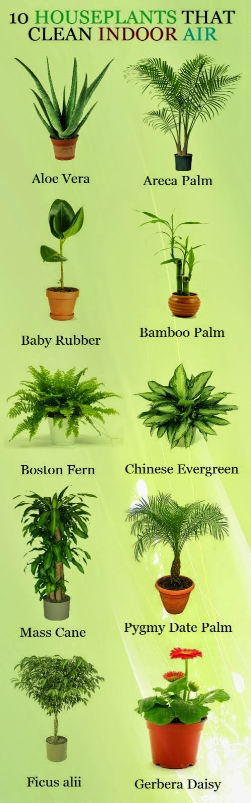 Picture of 10 plants that clean indoor air. Aloe Vera, Areca Palm, Baby Rubber Plant, Bamboo Palm, Boston Fern, Chinese Evergreen, Mass Cane, Pygmy Date Palm, Gerbera Daisy.
