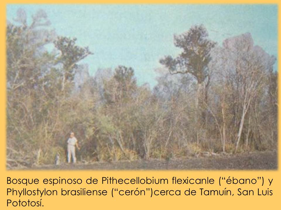 Bosque Espinoso