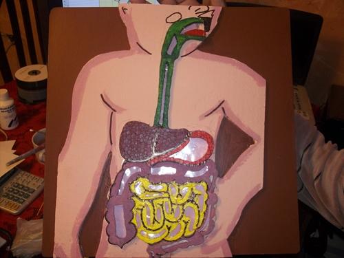 Maqueta del Sistema Digestivo con Imanes. Se pasa un iman por la part