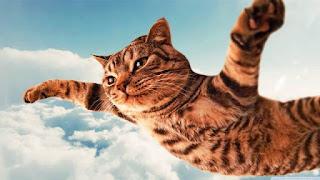 Gambar Wallpaper Kucing Lucu Banget 2000