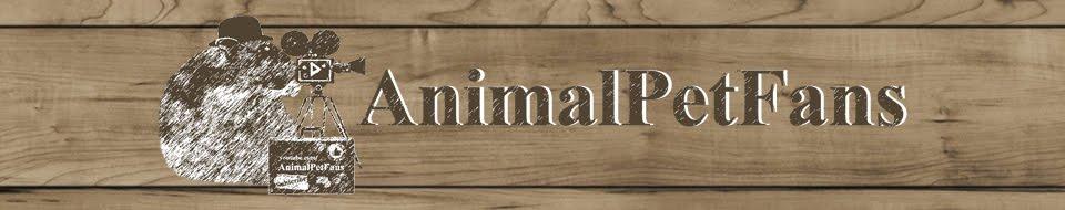 AnimalPetFans