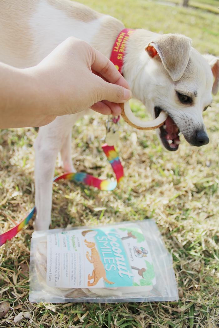 Best Crunchy Dog Cookies For Dog Tarter
