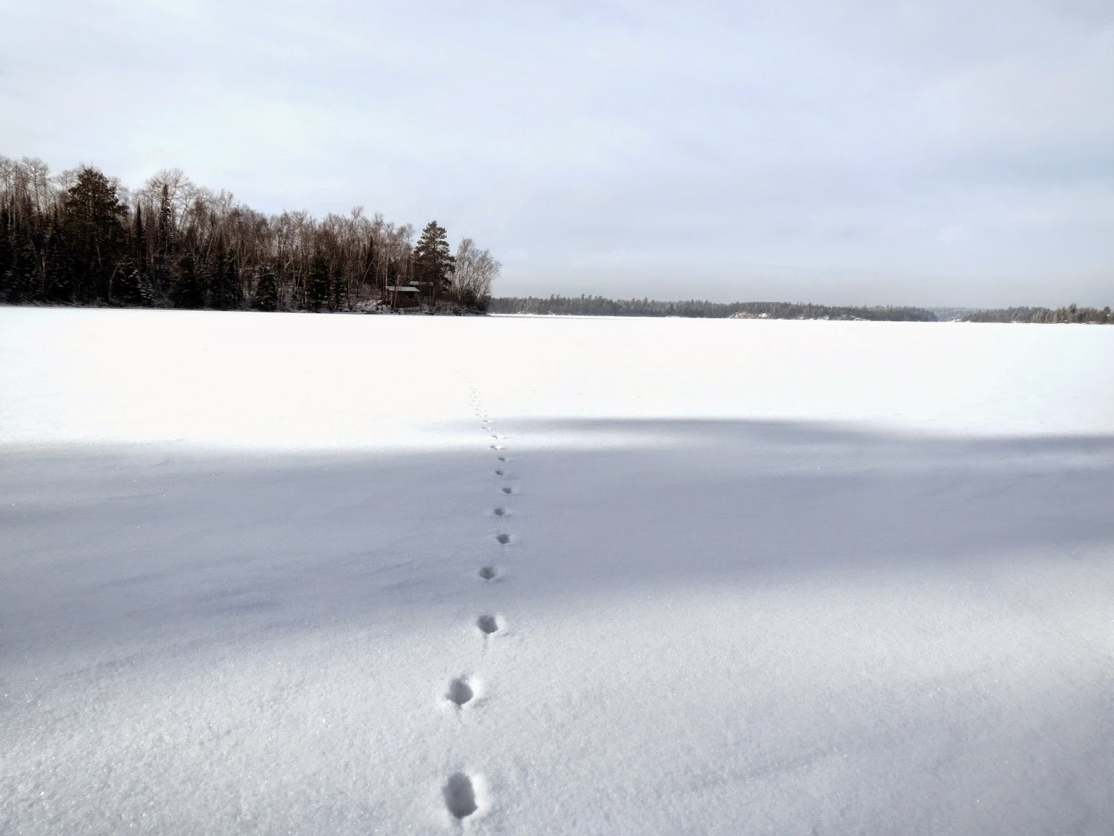 http://huismanconcepts.com/, ice, winter, frozen, lake, animal, tracks, Ely, Minnesota