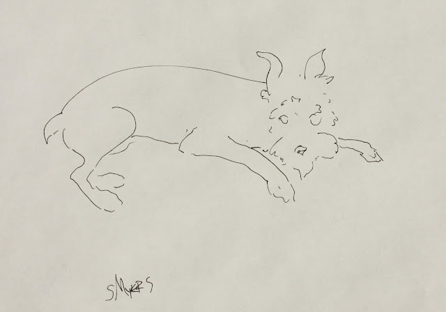 Schnauzer Watching, sketch, art, arte, line-drawing, dog, puppy, study, S. Myers, Sarah Myers, ink, paper