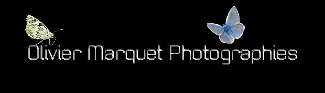 Olivier Marquet Photographies