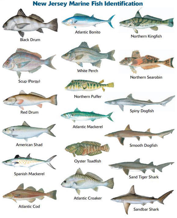 How to improve your situational awareness with natural for Best saltwater fishing spots in nj