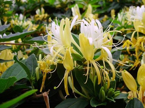 Εικόνες Φυτών... Agioklima
