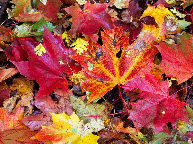 Red and Yellow fallen leaves