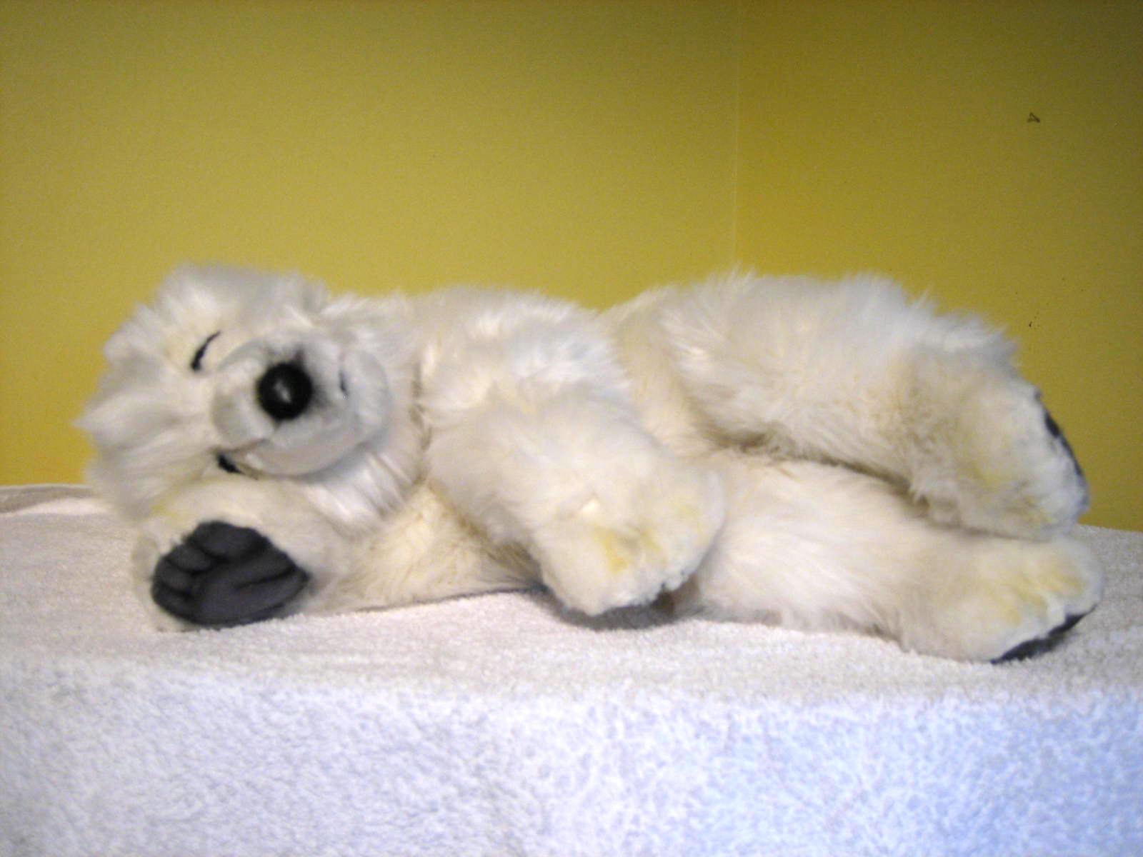 Baby polar bear sleeping - photo#21