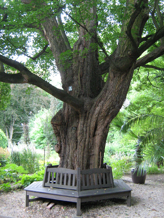 Ogród Botaniczny, Warszawa