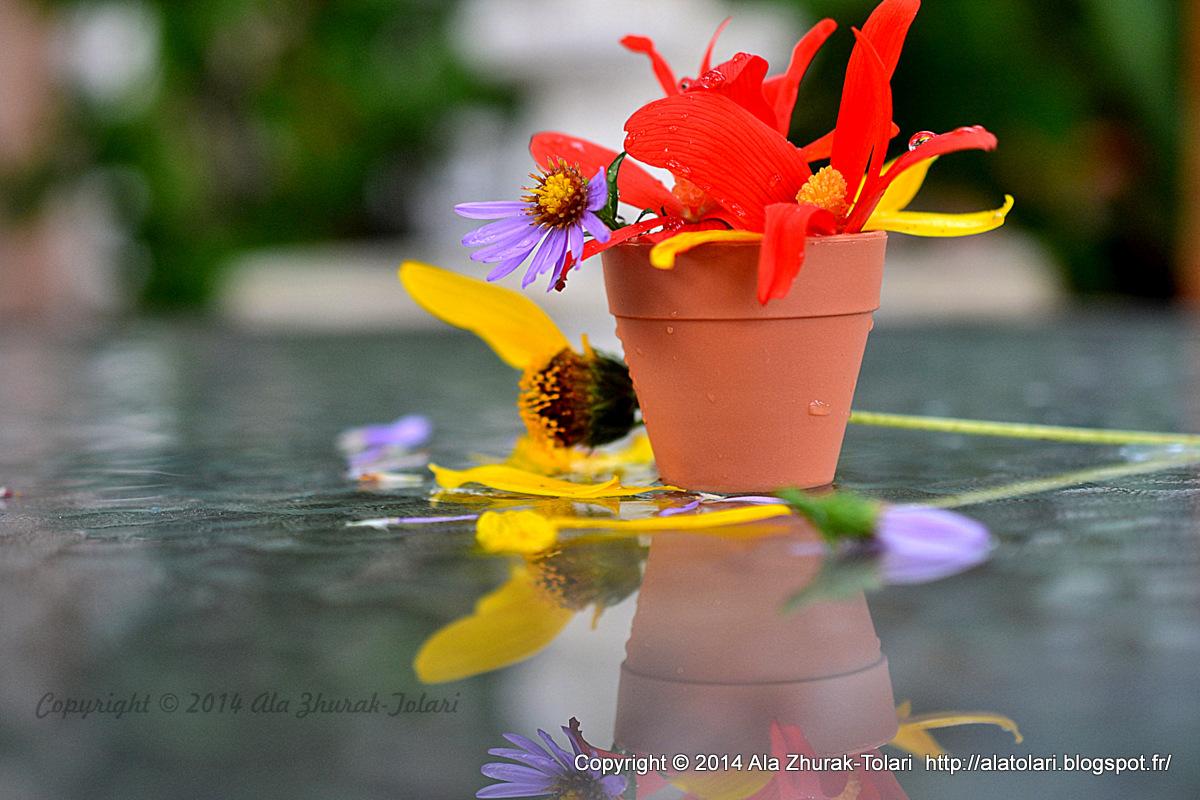 fleurs d'automne Photography by Ala Zhurak-Tolari