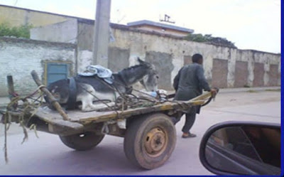 mule donkey