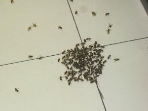 Ataque das abelhas
