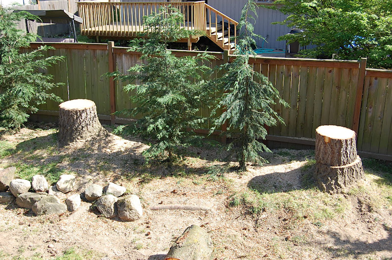 how to look after newlty planted tress