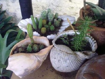 Junio 2012 for Caracoles de jardin como eliminarlos