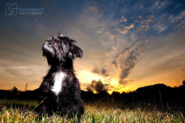 Dog Portrait at Sunset