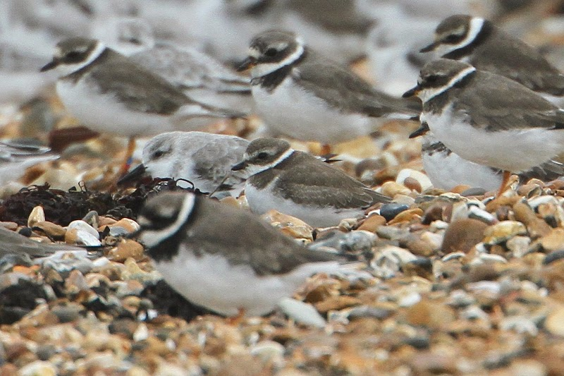 CWP Birding: October 2013