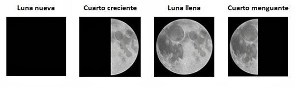 Verberana las fases lunares y la agricultura ecol gica Cuando hay luna creciente