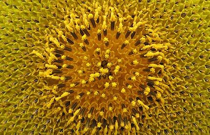 זונות סירטונים זין גדול בתחת