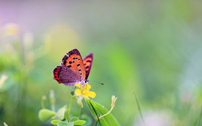 La foto de una mariposa que alcanzó más de 100 'Me gusta' en Facebook. ¡Mírala en tu escritorio!