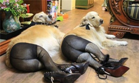 funny sexy lady dogs