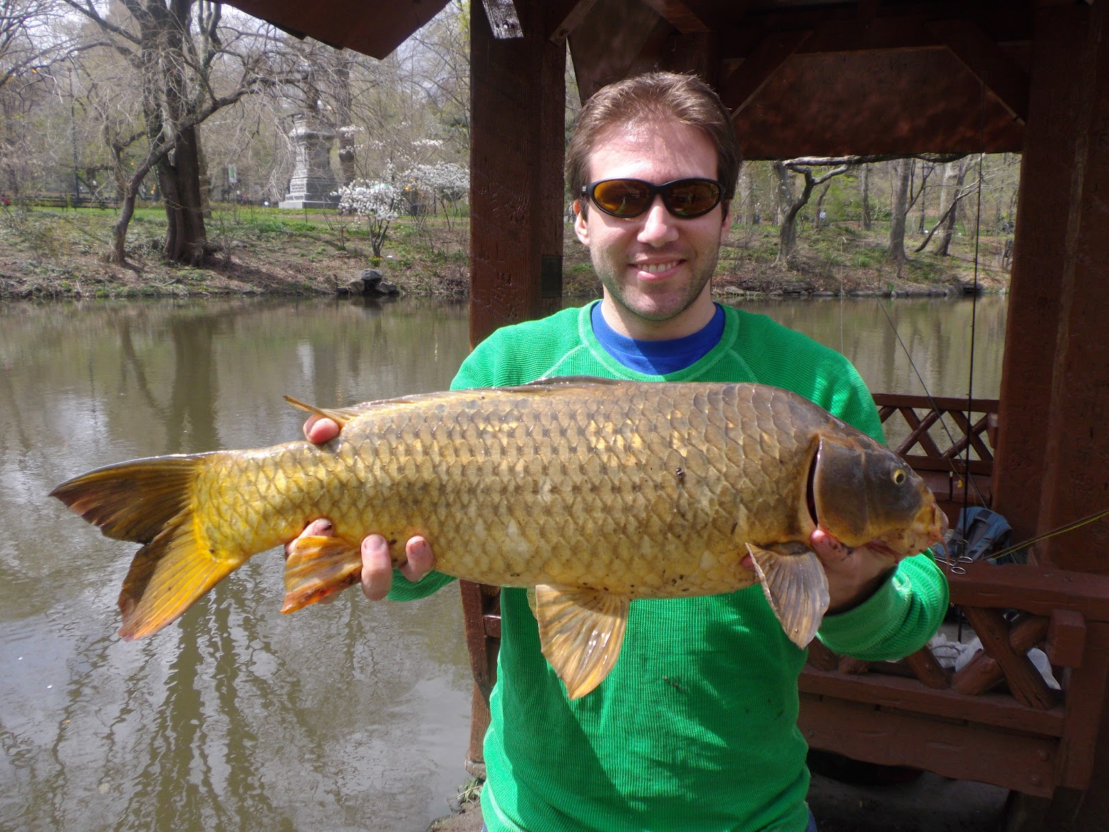 Fly fishing for carp in central park the great lakes of nyc for Carp fly fishing