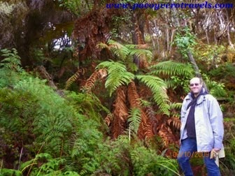bosque nativo de Helechos en Wai o tapu