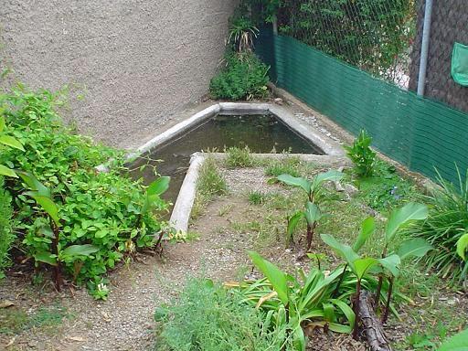 estanque para ejemplares de trachemys