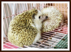 My SuPeR LoVeLY HeDGeHoGZ