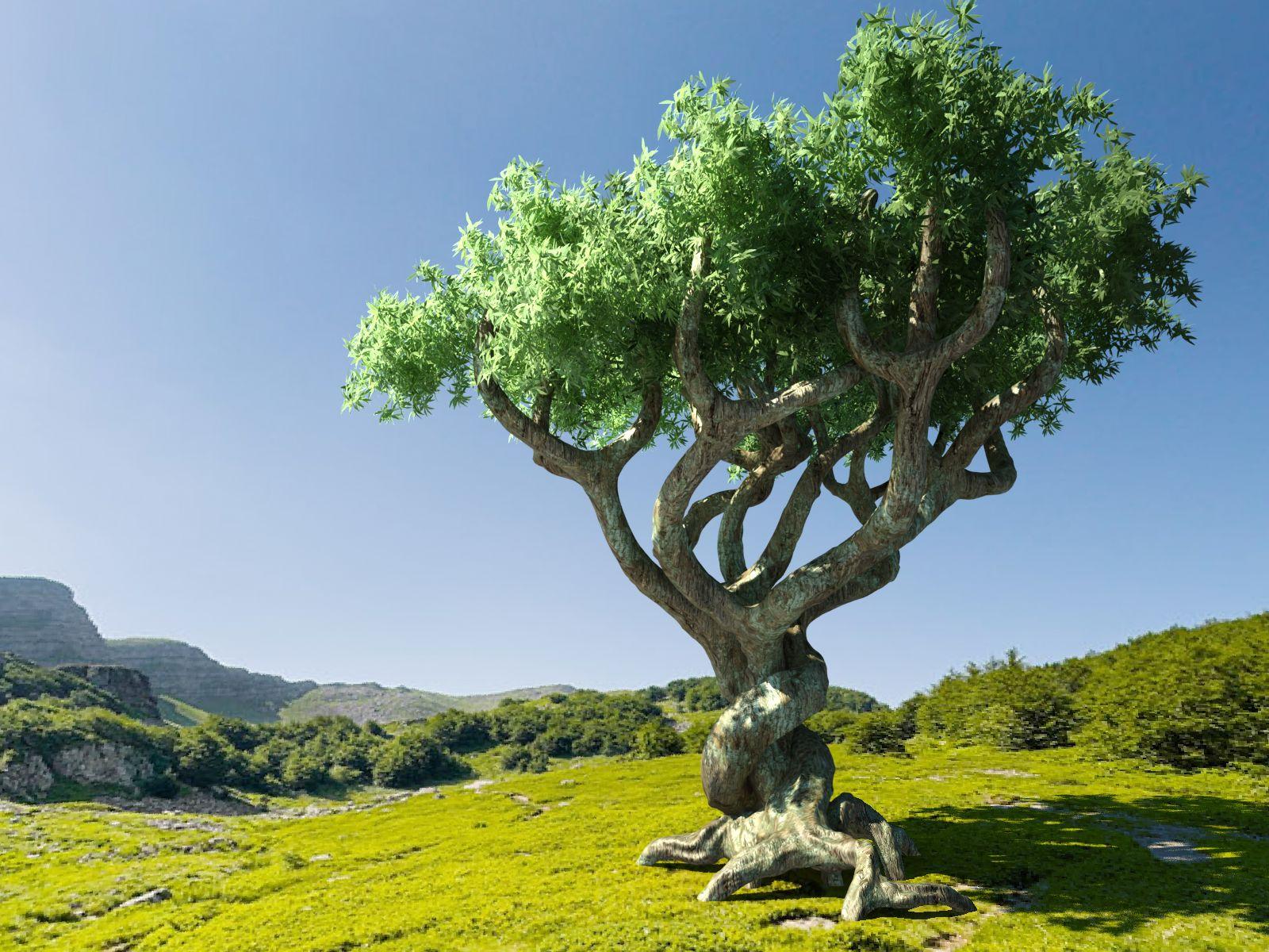Radio educa la magia de los rboles for Arboles y plantas de jardin