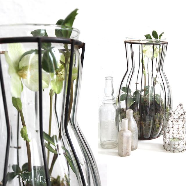 seidenfeins blog vom sch nen landleben christrosen in suppenterrine vase hellebores in. Black Bedroom Furniture Sets. Home Design Ideas