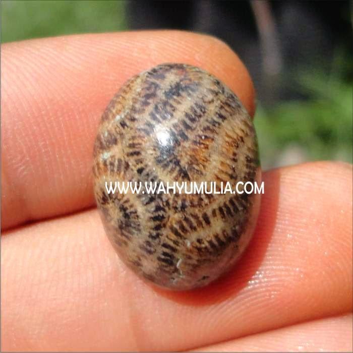 batu |permata | natural | BATU ANTIK FOSIL KELABANG | asli | termahal