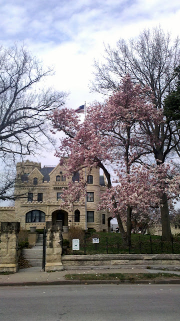 Magnolia tree blooming in front of Joslyn Castle in Omaha, Nebraska. Photo by Dan Sundermeier of American Arborist tree care provider.