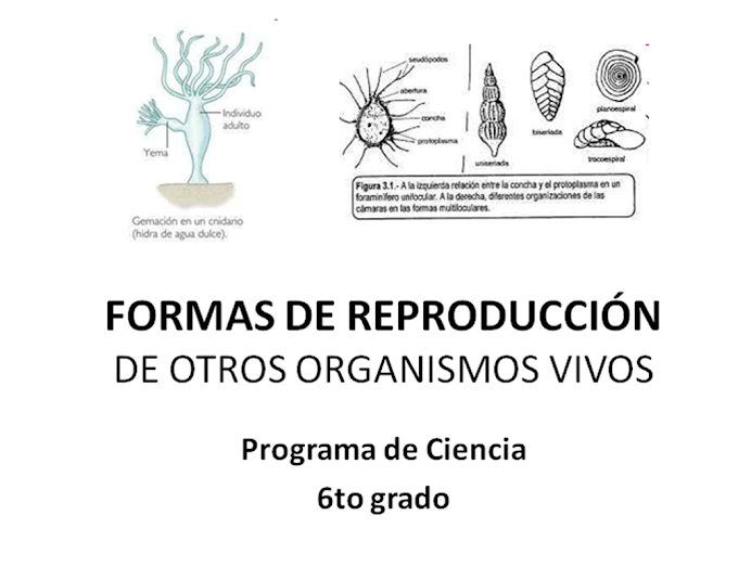 Otras forma de reproduccin de otros organismos