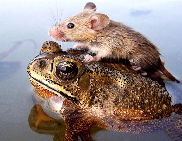 frog and mouseborder-βάτραχος και ποντίκι-παραμύθια-λόγια σοφά-λόγια απλά